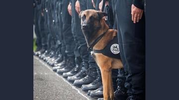 18-11-2015 13:27 Psi antyterrorysta zginął w Paryżu