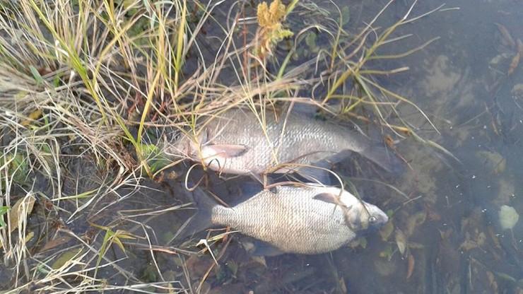 Cztery osoby z zarzutami zatrucia Warty. Zginęły tony ryb