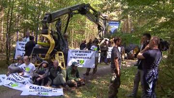 Aktywiści ponownie zablokowali maszynę w Puszczy Białowieskiej