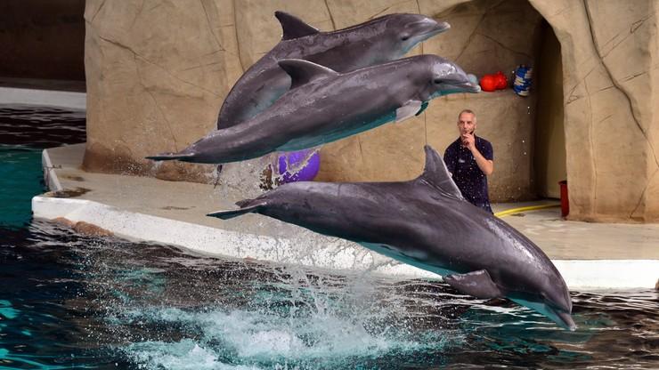 Rosyjska armia chce kupić delfiny