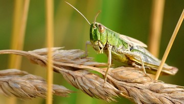 17-07-2017 20:25 Dramatyczne w skutkach wymieranie owadów - alarmuje niemiecka minister środowiska