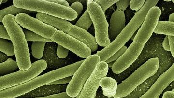 28-05-2016 09:32 USA: wykryto bakterię odporną na antybiotyki