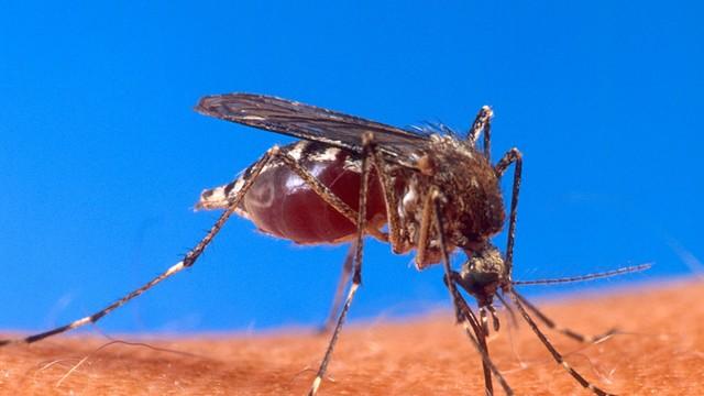 Samorząd Rzeszowa prowadzi opryski przeciw kleszczom i komarom