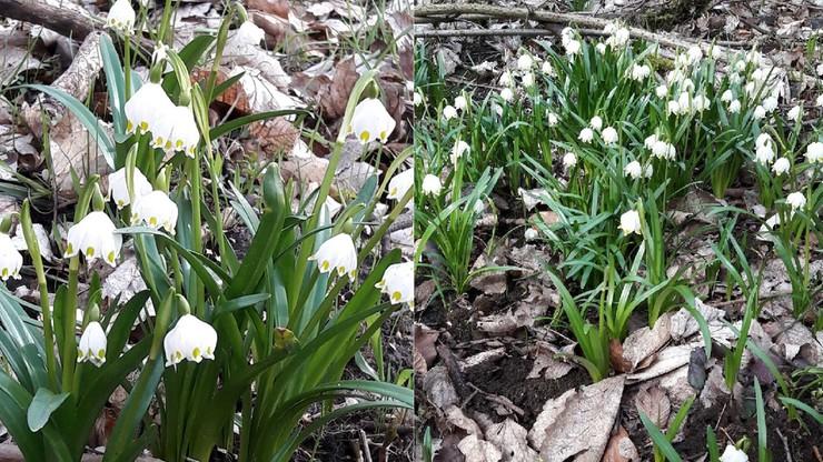 Pierwszy dzień astronomicznej wiosny. Będzie coraz cieplej