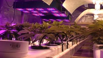 31-05-2017 12:33 Hydroponiczna z oświetleniem LED. Zlikwidowano nowatorską plantację marihuany. Policjanci: jeszcze takiej nie widzieliśmy