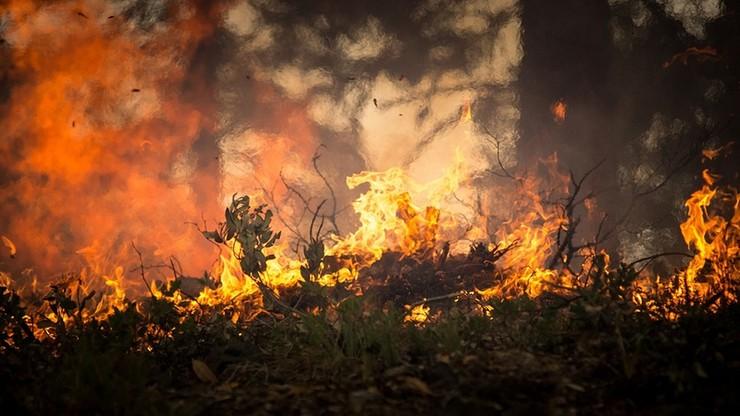 Upały i szalejące pożary w Macedonii. Ogłoszono stan wyjątkowy