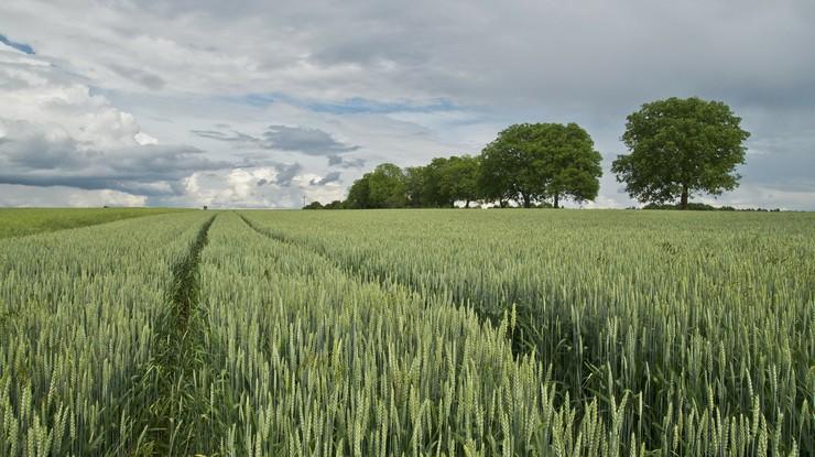 KE pozywa Węgry do unijnego sądu ws. ustawy o sprzedaży ziemi