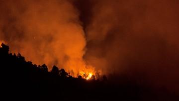 """04-08-2016 15:33 Załatwiał w lesie """"potrzebę"""", podpalił papier toaletowy. Pożaru lasu dotąd nie ugaszono"""