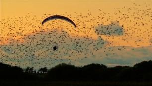 Spełnione marzenie paralotniarza. Wzbił się w powietrze razem z tysiącami ptaków