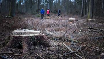 01-04-2016 19:06 Rada Naukowa Leśnictwa: jedyną metodą prowadzenia gospodarstwa leśnego jest siekiera
