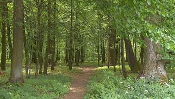 03-07-2017 13:57 Puszcza Białowieska na Liście Światowego Dziedzictwa Zagrożonego - UNESCO nie wyklucza