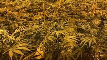 23-02-2017 21:25 W schronie przeciwatomowym rosła... plantacja marihuany. Przetrwałaby wojnę jądrową