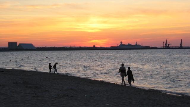 Dobre sinice pomogą w walce z toksycznymi zakwitami w Bałtyku
