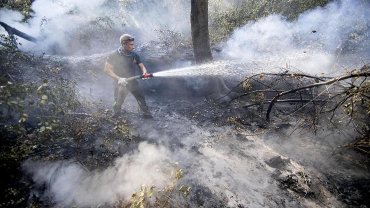 W tydzień pożary we Włoszech pochłonęły taki obszar, jak w całym 2016 r.