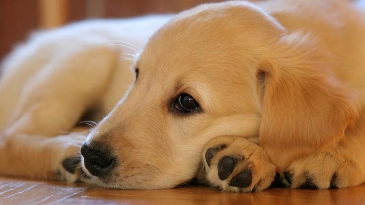 Za znęcanie nad zwierzętami wyższe kary. Rząd przyjął projekt