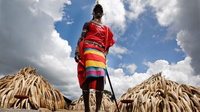 Prezydent Kenii podpalił stos zarekwirowanej kości słoniowej