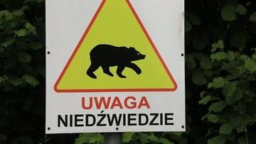 25-07-2017 16:23 Uwaga! Niedźwiedzie atakują ludzi na Pogórzu Przemyskim