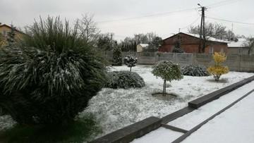 2017-04-18 Kalisz zasypany śniegiem