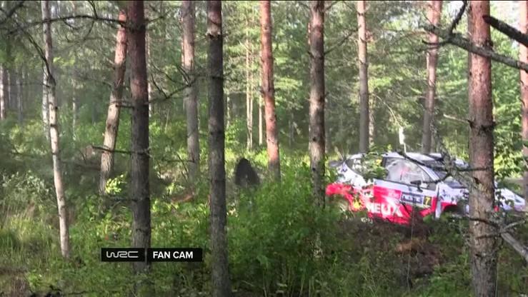 Neuville ścina kamerę i... drzewo na Rajdzie Finlandii