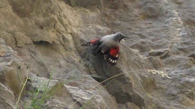 Sensacja ornitologiczna w Wałbrzychu. Zadomowił się egzotyczny ptak
