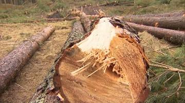 11-05-2017 14:27 Ustawa o wycince drzew. Sejm poparł poprawki Senatu