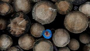Sąd w Hajnówce uznał ekologów za winnych, ale nie wymierzył im kary