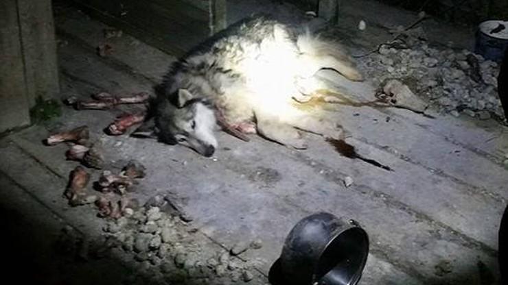 Zagłodzony pies zmarł po długiej reanimacji. Rodzina z Garwolina zaniedbała zwierzę