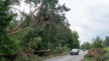 10-07-2017 12:28 Potężna trąba powietrzna przeszła nad woj. śląskim. Zniszczyła 1500 ha lasów
