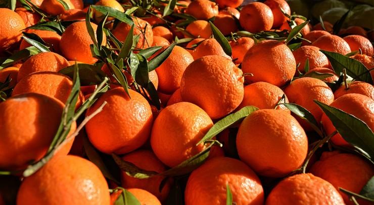 Prawie 500 rannych po... bitwie na pomarańcze