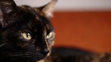 01-03-2016 10:06 Siedlce: policja zatrzymała podejrzanego o skatowanie kota