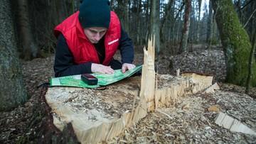 Trwa już wyrąb w Puszczy Białowieskiej - alarmuje Greenpeace