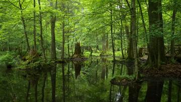 03-06-2016 21:58 UNESCO oceni stan Puszczy Białowieskiej