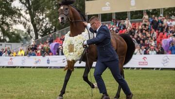 13-08-2017 18:49 Ogier Pogrom najlepszym koniem pokazu w Janowie Podlaskim. Trwa aukcja Pride of Poland