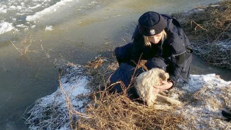 Policjanci uratowali tonącego w rzece psa