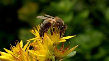 26-02-2017 22:11 Unia nie chce pestycydów. Zamierza wspierać biologiczne środki ochrony roślin