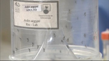 02-06-2016 08:46 Wirus Zika nie będzie groźny dla polskich sportowców