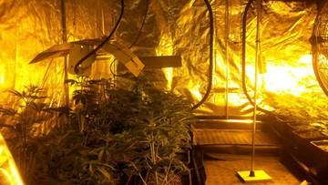 02-05-2017 12:14 Zlikwidowano plantację marihuany w powiecie wadowickim