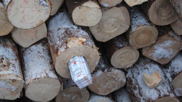 CBŚP i Służba Celna udaremniły przemyt papierosów w balach sosnowych
