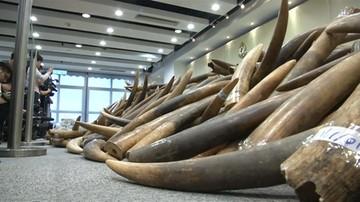 Policja przejęła ok. 3 ton kości słoniowej przemycanej z RPA