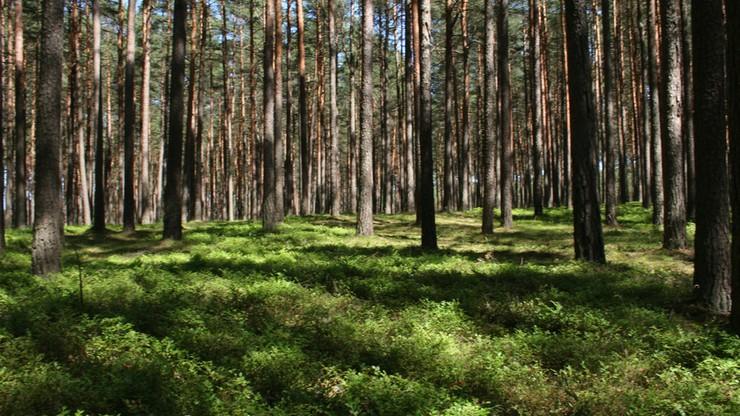 40 mln euro z programu LIFE na ochronę przyrody w Polsce