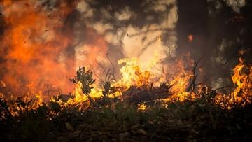 06-08-2017 19:57 Upały i szalejące pożary w Macedonii. Ogłoszono stan wyjątkowy