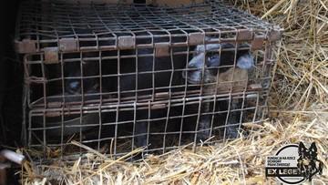 10-05-2016 11:49 Schorowane i wciśnięte w klatki. Psy przetrzymywane w skandalicznych warunkach