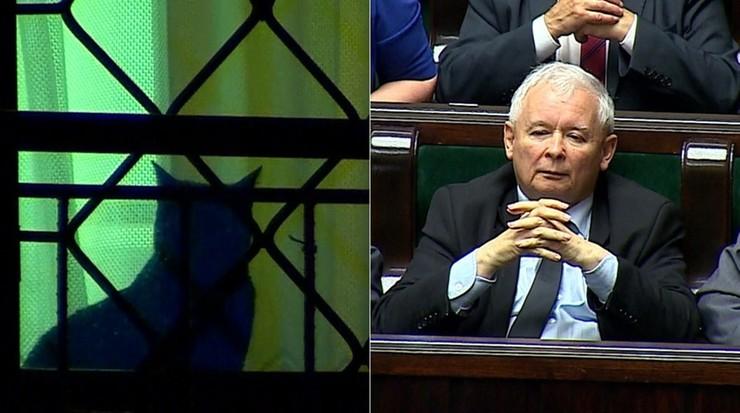 """""""Atak odparł mój kot"""". Kaczyński o """"obleganiu"""" domu przez manifestantów"""