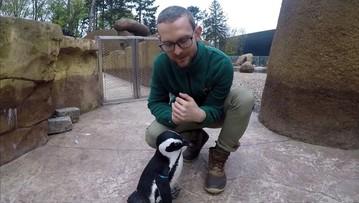 25-04-2017 15:30 Janush gwiazdą Światowego Dnia Pingwinów we wrocławskim zoo