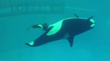Narodziny małej orki
