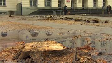 """2017-02-18 Wycięli drzewa rosnące tuż przed urzędem. """"To są działania pozaprawne"""""""