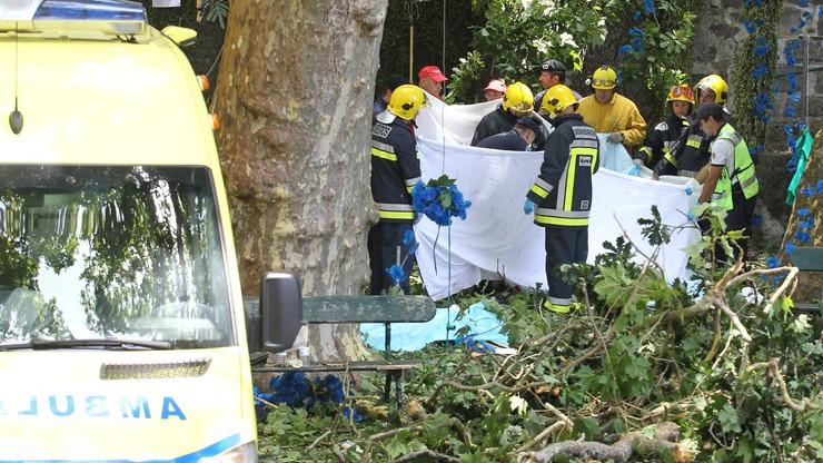 Wzrosła liczba ofiar upadku 200-letniego drzewa na Maderze