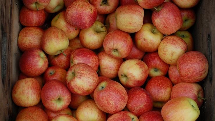 Jabłka w cenie mandarynek. Sadownicy zapowiadają, że będzie jeszcze drożej
