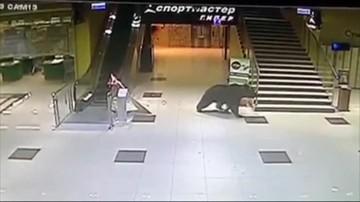 Rosja: zastrzelono niedźwiedzia, który zabłądził w centrum handlowym