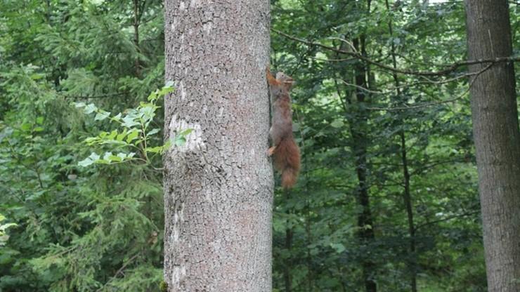 """Zwierzęta z leśnego """"szpitala"""" trafiły do lasu"""